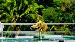 Horizon-Penthouse-8-Puerto-Vallarta-Real-Estate--33