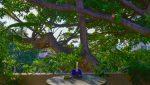 Loma_Del_Mar_C_2_Puerto_Vallarta_Real_estate-