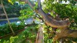 Loma_Del_Mar_C_2_Puerto_Vallarta_Real_estate--32